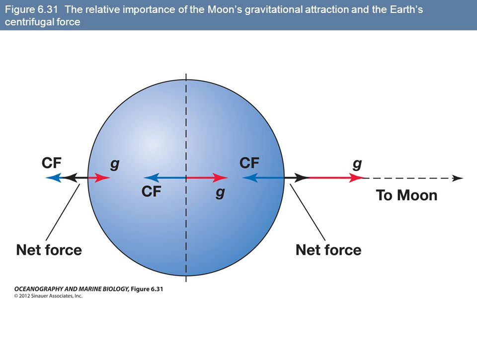 Figure 6.31 The relative importance of the Moon's gravitational attraction and the Earth's centrifugal force