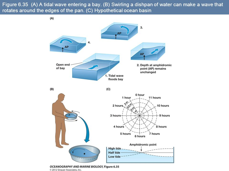 Figure 6.35 (A) A tidal wave entering a bay. (B) Swirling a dishpan of water can make a wave that rotates around the edges of the pan. (C) Hypothetica