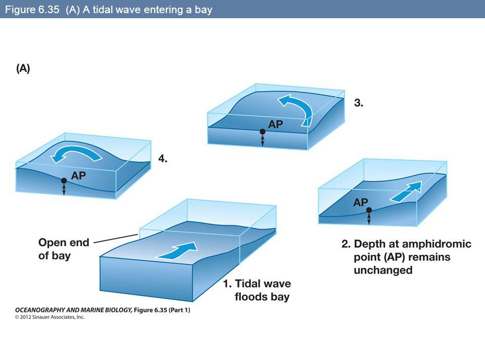 Figure 6.35 (A) A tidal wave entering a bay