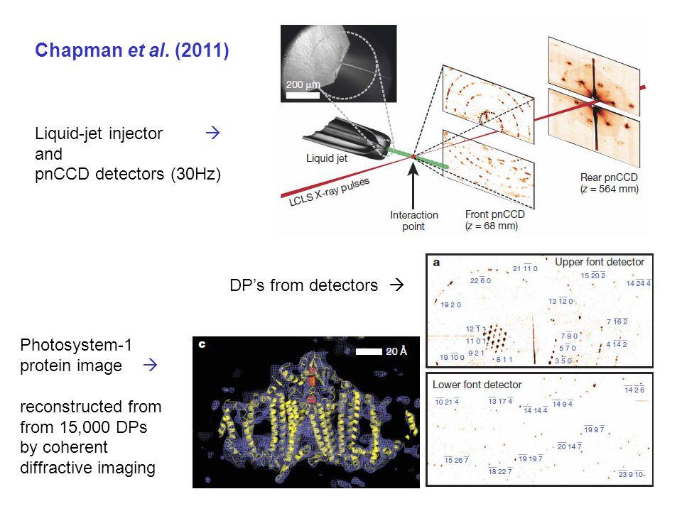 Chapman et al.