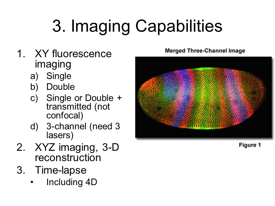 3. Imaging Capabilities 1.XY fluorescence imaging a)Single b)Double c)Single or Double + transmitted (not confocal) d)3-channel (need 3 lasers) 2.XYZ