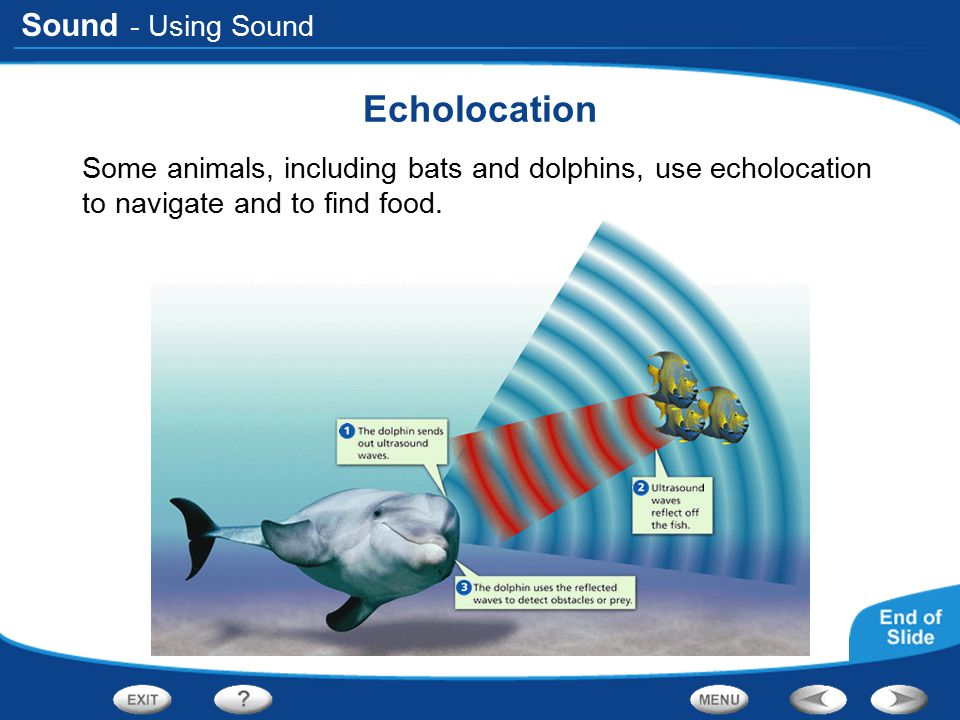 Sound - Using Sound Echolocation Some animals, including bats and dolphins, use echolocation to navigate and to find food.