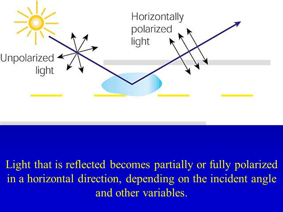 Light that is reflected becomes partially or fully polarized in a horizontal direction, depending on the incident angle and other variables.