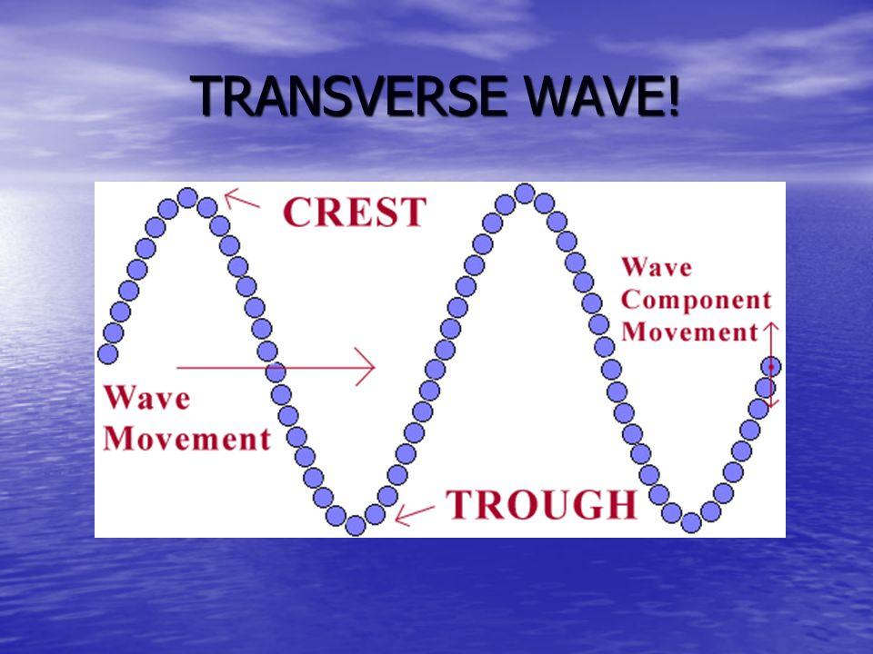 TRANSVERSE WAVE!