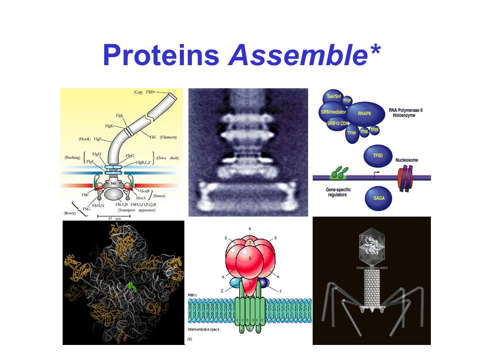 Proteins Assemble*