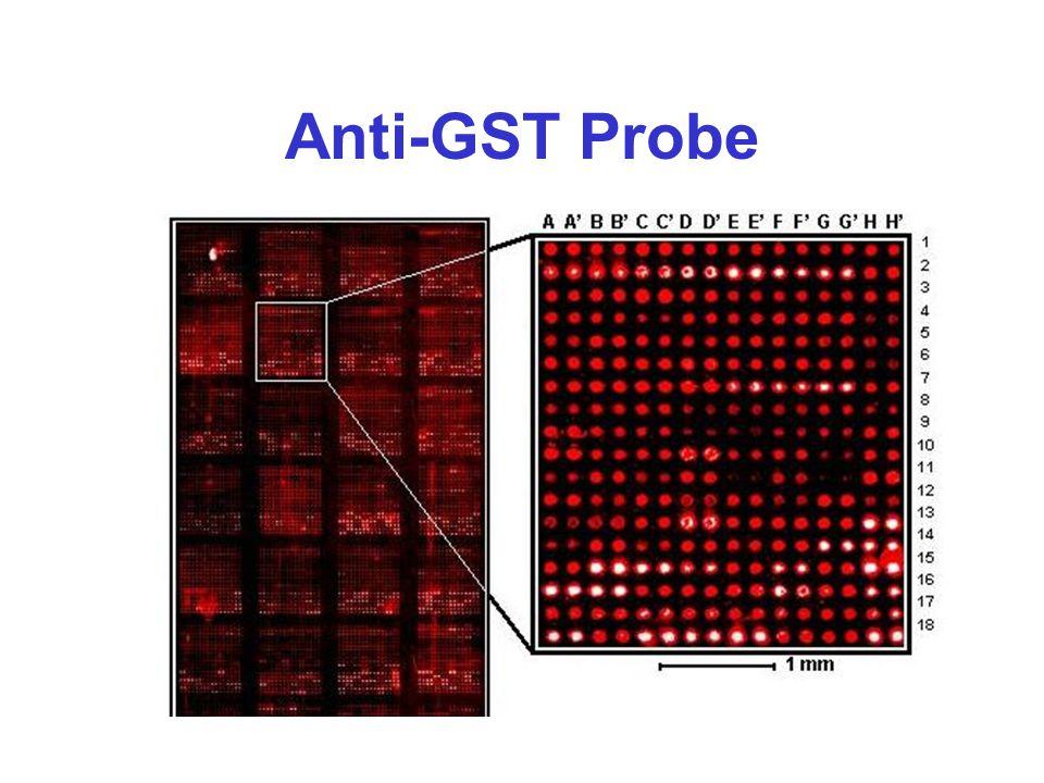 Anti-GST Probe