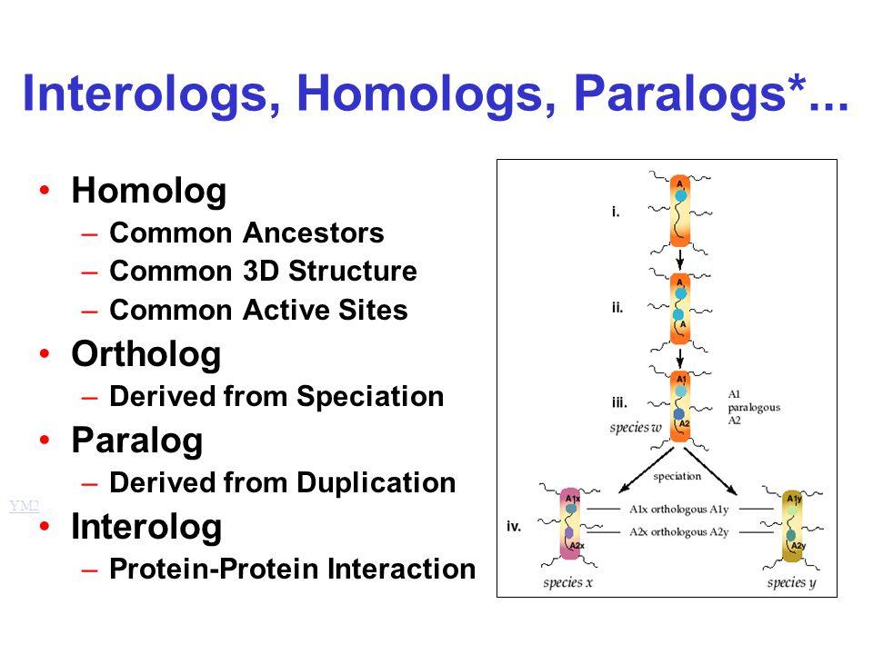 Interologs, Homologs, Paralogs*... Homolog –Common Ancestors –Common 3D Structure –Common Active Sites Ortholog –Derived from Speciation Paralog –Deri