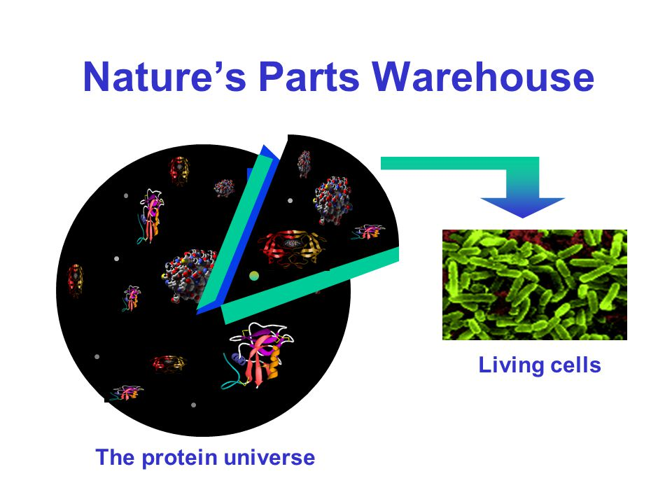 Protein Interaction Domains http://pawsonlab.mshri.on.ca/