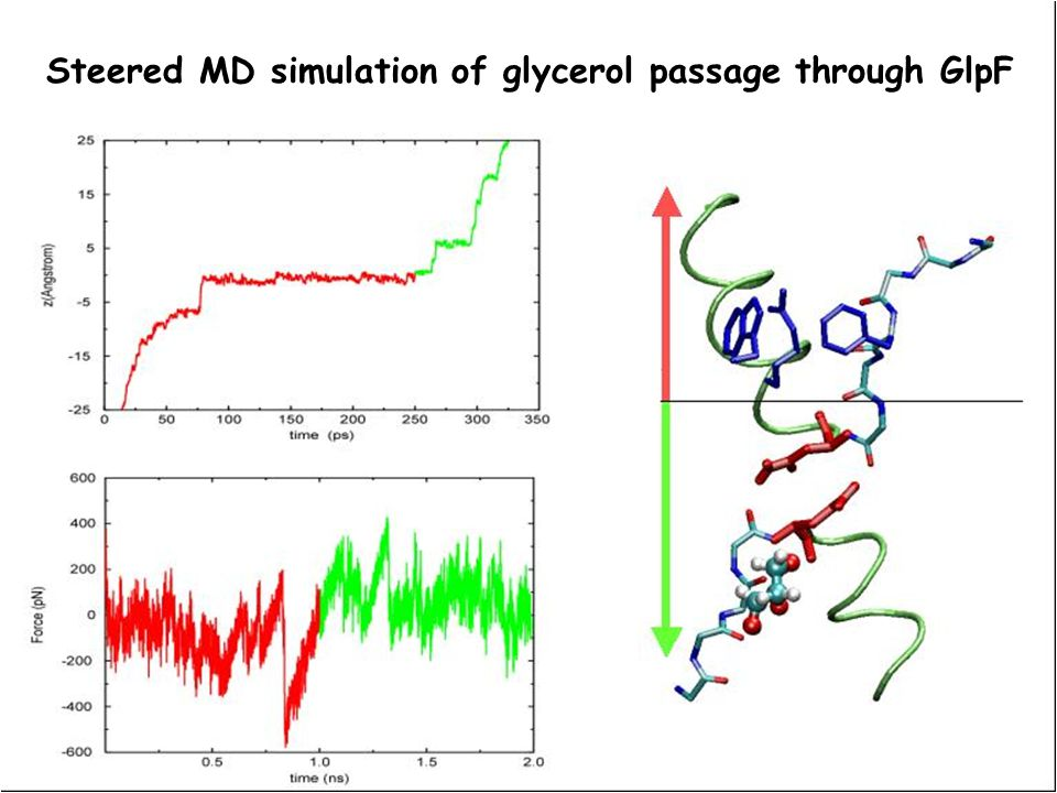 Steered MD simulation of glycerol passage through GlpF