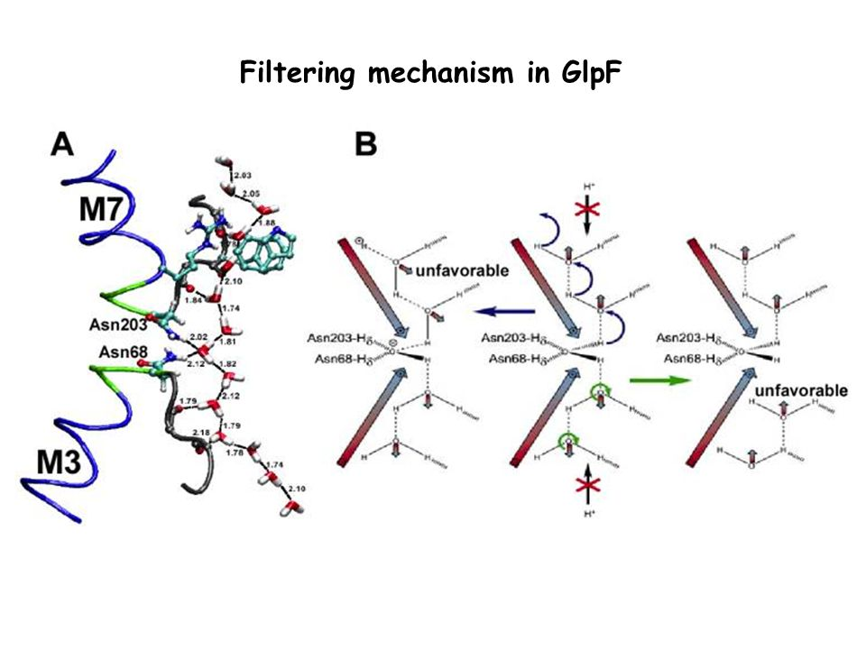 Filtering mechanism in GlpF