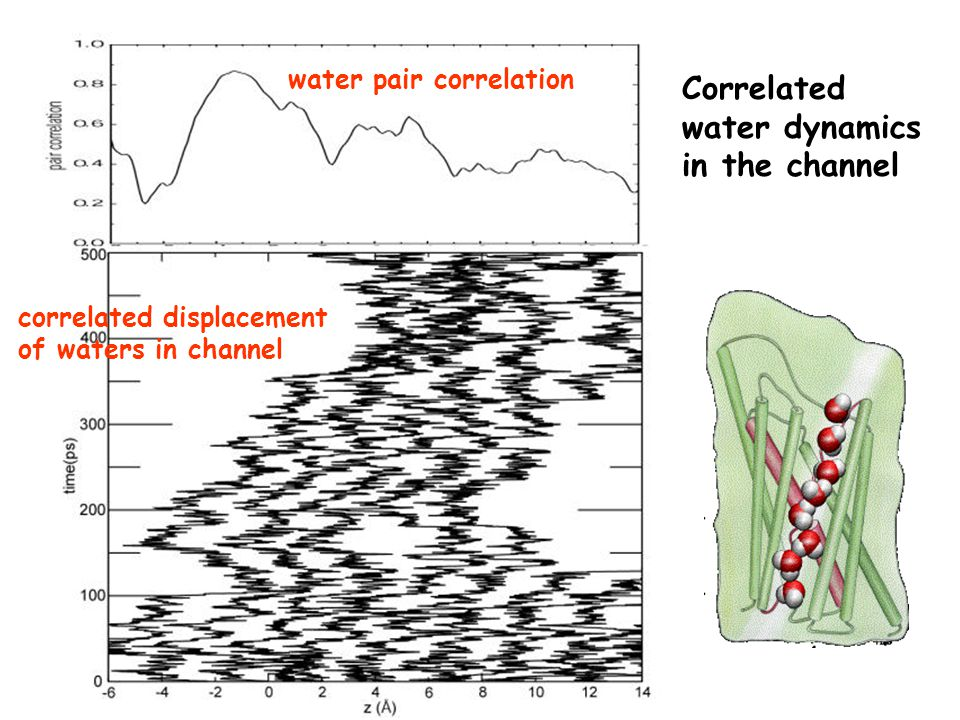 Correlated water dynamics in the channel correlated displacement of waters in channel water pair correlation