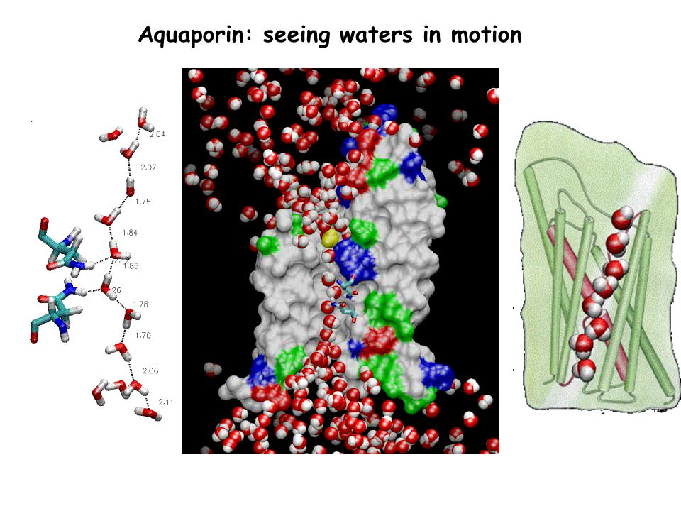 Aquaporin: seeing waters in motion