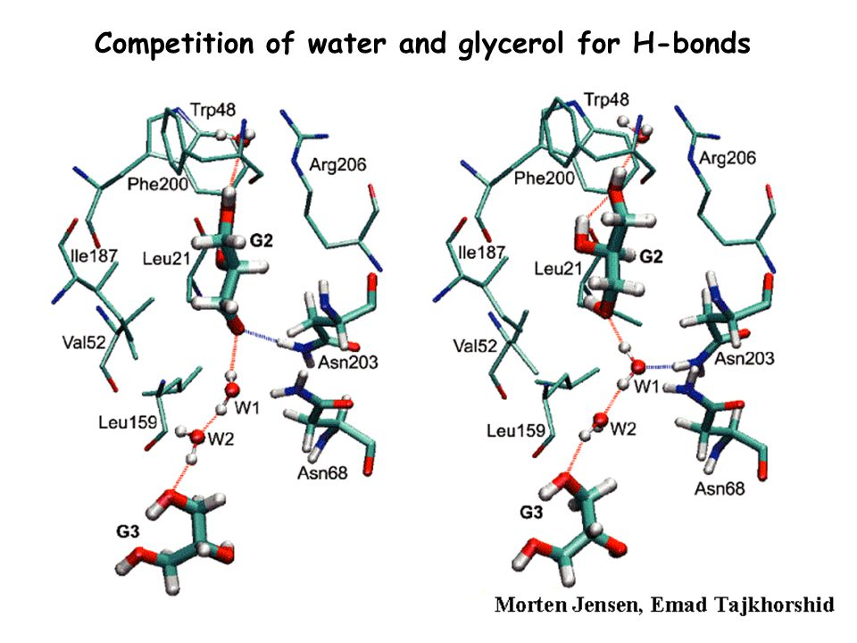 Competition of water and glycerol for H-bonds