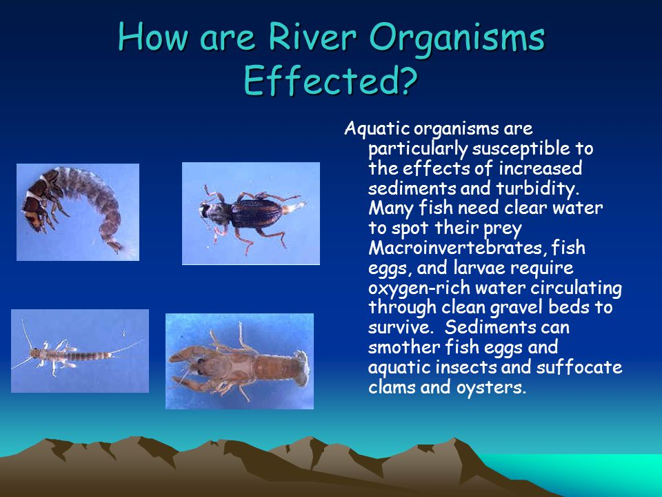 Effects of Organisms cont….Cloudy water absorbs more of the sun's energy than clear water.