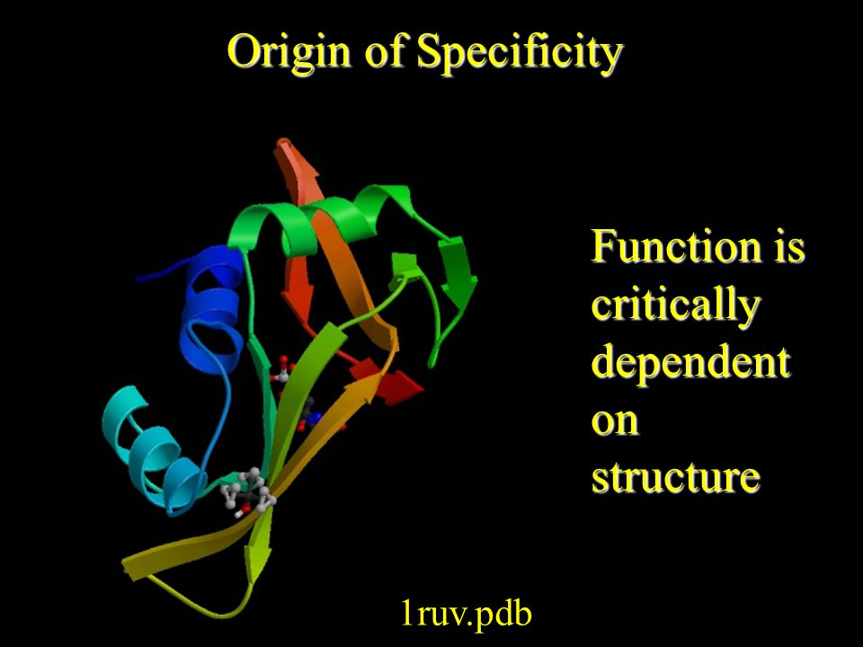 Origin of Specificity 1ruv.pdb Function is critically dependent on structure