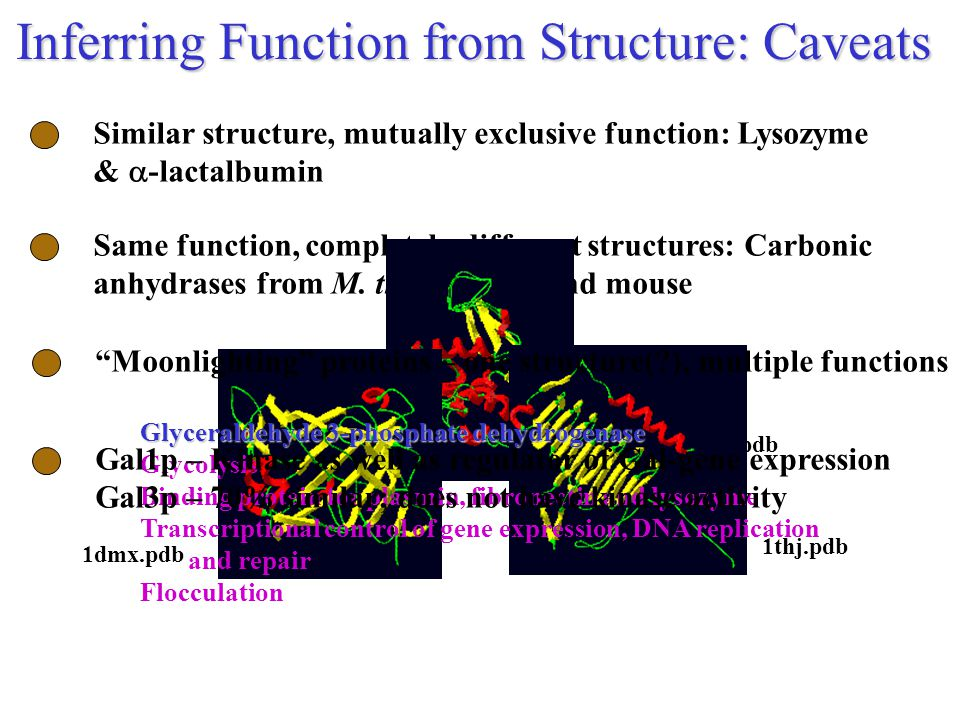 Similar structure, mutually exclusive function: Lysozyme &  -lactalbumin Inferring Function from Structure: Caveats Same function, completely different structures: Carbonic anhydrases from M.