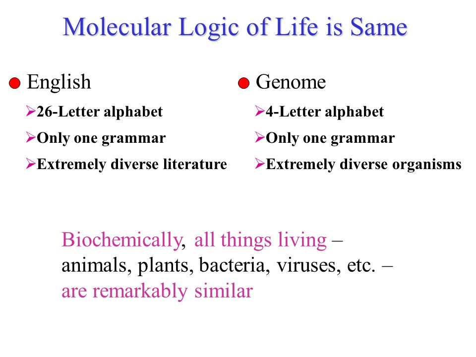 Molecular Logic of Life is Same Biochemically, all things living – animals, plants, bacteria, viruses, etc. – are remarkably similar English  26-Lett