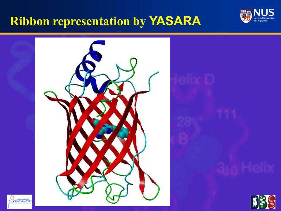 Ribbon representation by YASARA