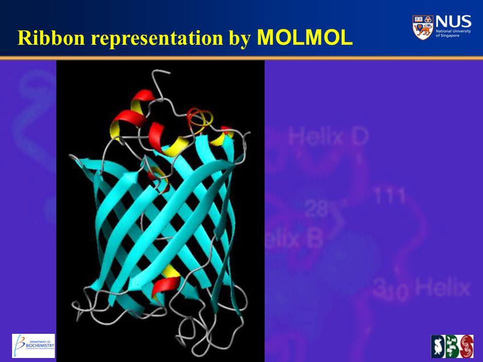 Ribbon representation by MOLMOL