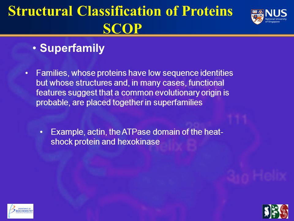 Superfamily Structural Classification of Proteins SCOP Families, whose proteins have low sequence identities but whose structures and, in many cases, functional features suggest that a common evolutionary origin is probable, are placed together in superfamilies Example, actin, the ATPase domain of the heat- shock protein and hexokinase