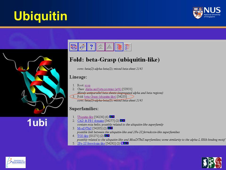 Ubiquitin 1ubi