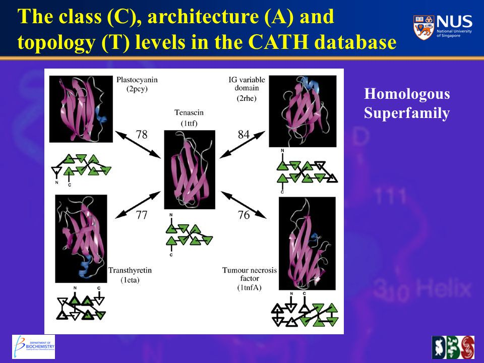 The class (C), architecture (A) and topology (T) levels in the CATH database Homologous Superfamily