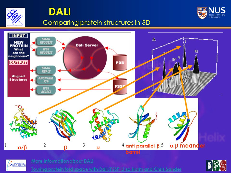 DALI    anti parallel  barrel  meander More information about DALI Touring protein fold space with Dali/FSSP: Liisa Holm and Chris Sander Comparing protein structures in 3D