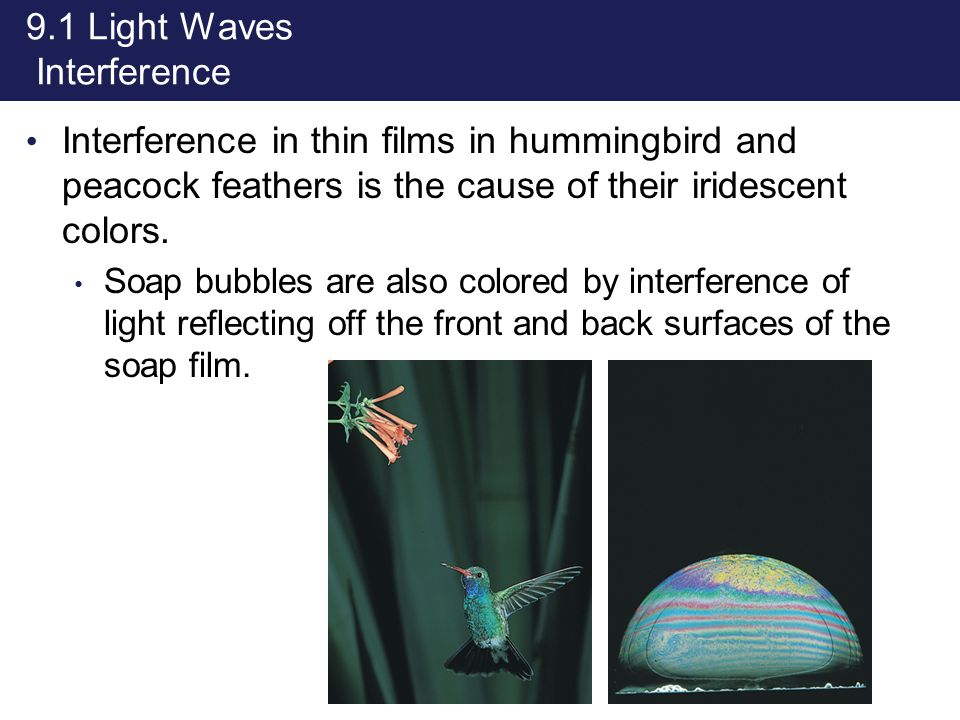 9.1 Light Waves Interference Interference in thin films in hummingbird and peacock feathers is the cause of their iridescent colors. Soap bubbles are