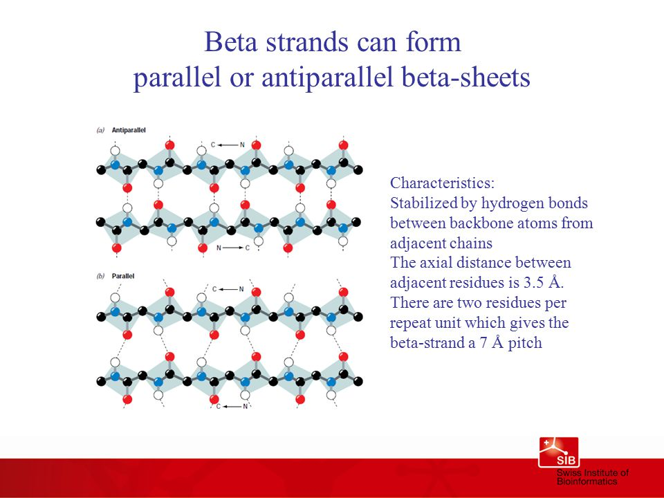 Beta strands can form parallel or antiparallel beta-sheets Characteristics: Stabilized by hydrogen bonds between backbone atoms from adjacent chains The axial distance between adjacent residues is 3.5 Å.