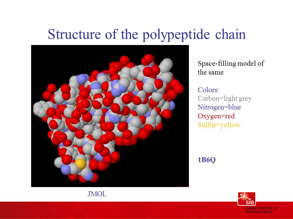 Structure of the polypeptide chain Space-filling model of the same Colors: Carbon=light grey Nitrogen=blue Oxygen=red Sulfur=yellow 1B6Q JMOL