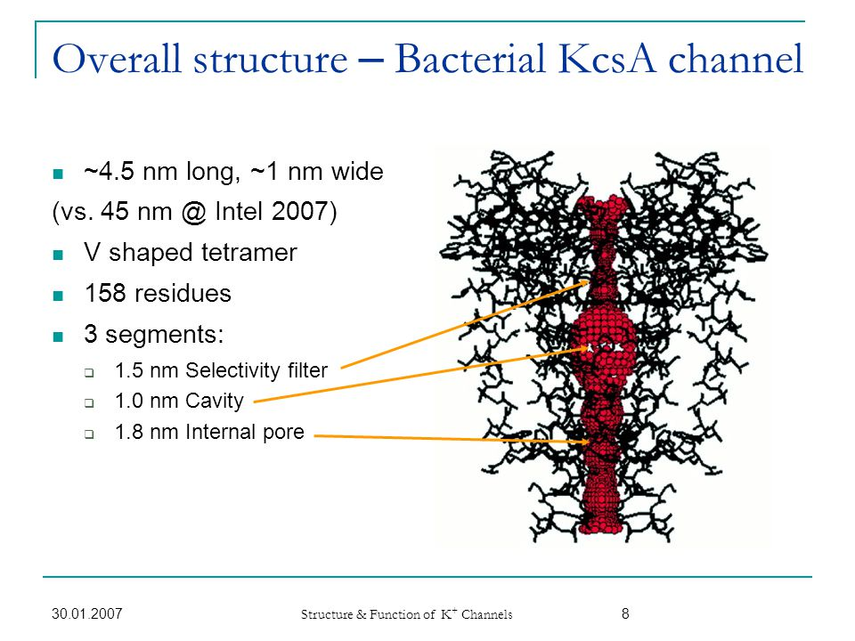 30.01.2007 Structure & Function of K + Channels 9 Elementary electrostatic considerations Negative charges raise local K + availability at channel entrance.