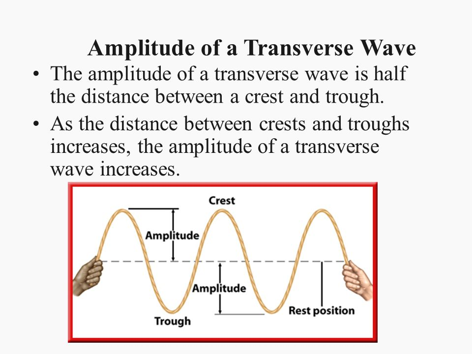 The amplitude of a transverse wave is half the distance between a crest and trough. Amplitude of a Transverse Wave As the distance between crests and