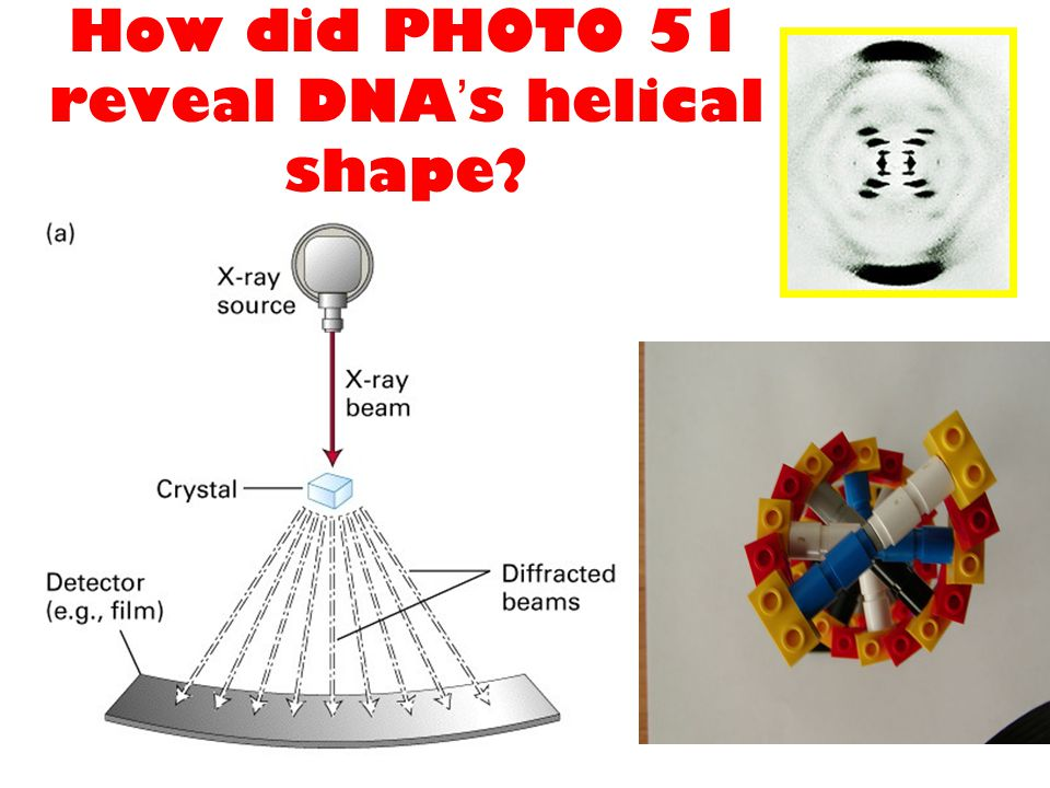 How did PHOTO 51 reveal DNA's helical shape
