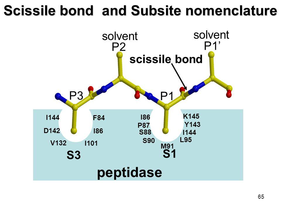 65 Scissile bond and Subsite nomenclature S1 S3 S1 peptidase P1 P2 P3 P1' scissile bond I86 I144 S88 D142 V132 I101 I86 F84 P87 S90 M91 L95 I144 Y143 K145 solvent