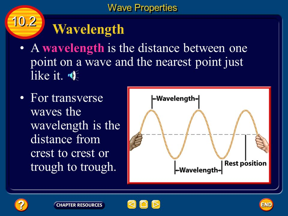 The Parts of a Wave The coils in the region next to a compression are spread apart, or less dense. This less-dense region of a compressional wave is c