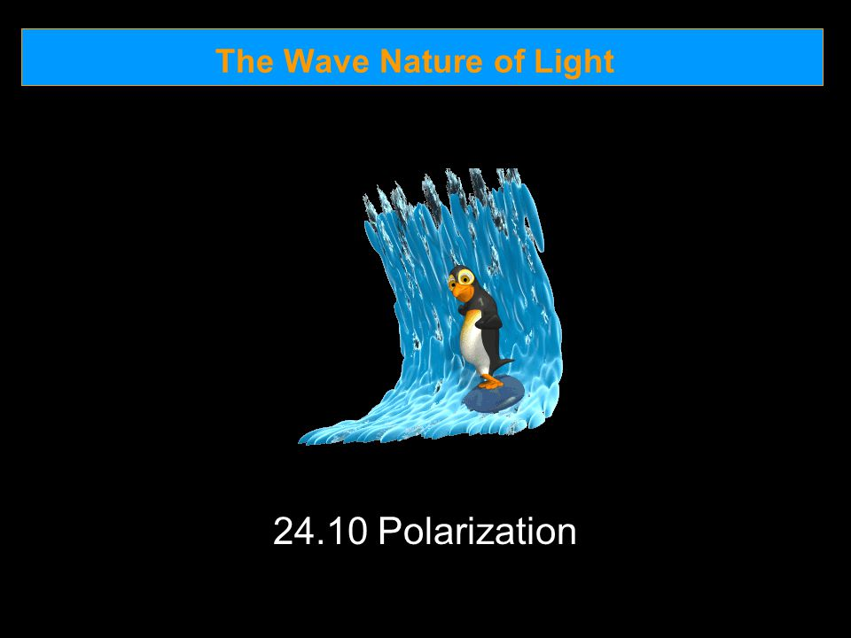 The Wave Nature of Light 24.10 Polarization