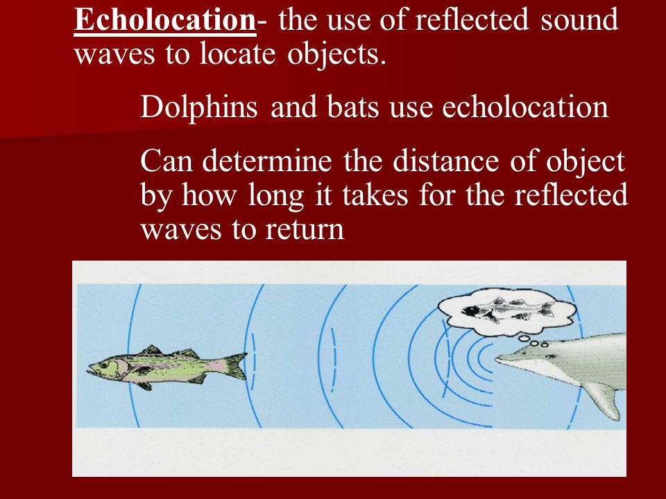 Echolocation- the use of reflected sound waves to locate objects.
