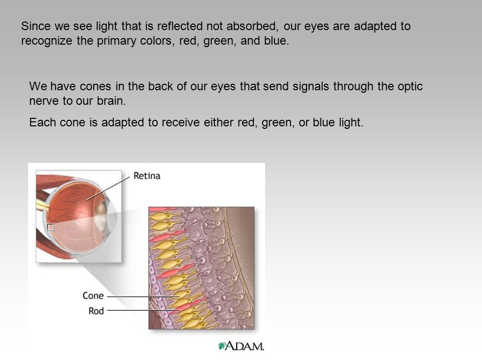 Since we see light that is reflected not absorbed, our eyes are adapted to recognize the primary colors, red, green, and blue. We have cones in the ba