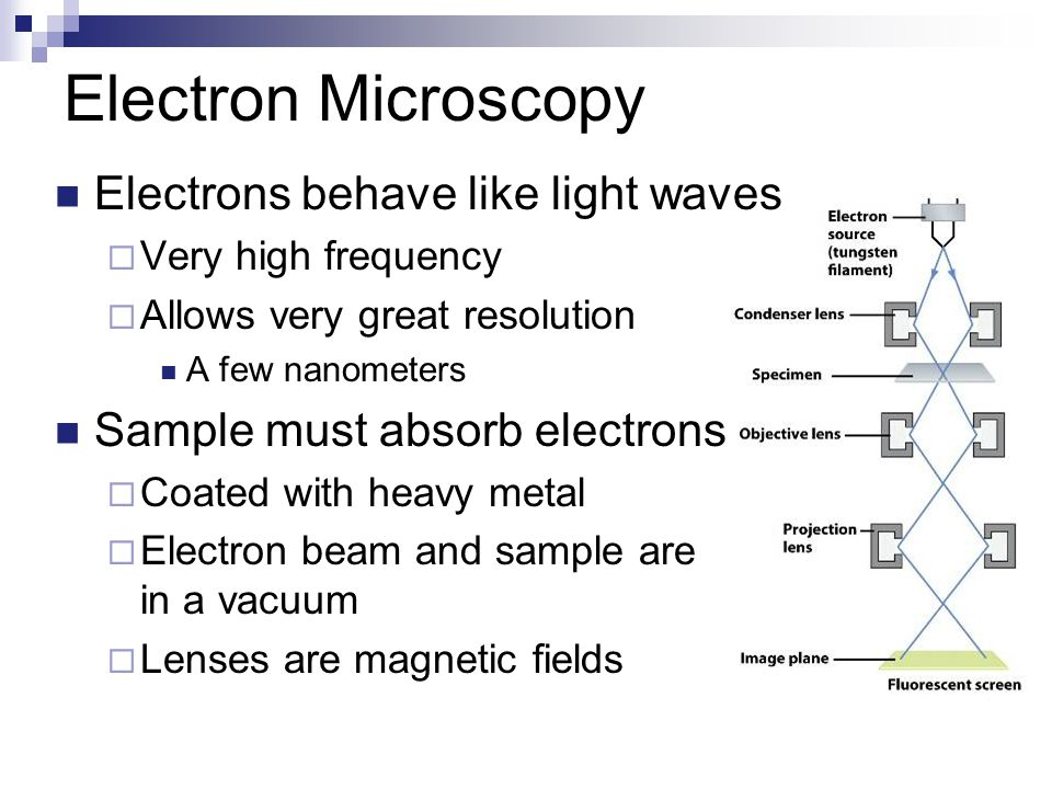 Electron Microscopy Electrons behave like light waves  Very high frequency  Allows very great resolution A few nanometers Sample must absorb electrons  Coated with heavy metal  Electron beam and sample are in a vacuum  Lenses are magnetic fields