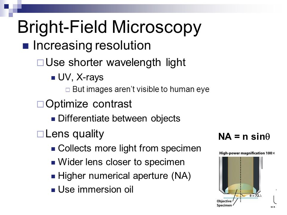 Bright-Field Microscopy Increasing resolution  Use shorter wavelength light UV, X-rays  But images aren't visible to human eye  Optimize contrast Differentiate between objects  Lens quality Collects more light from specimen Wider lens closer to specimen Higher numerical aperture (NA) Use immersion oil NA = n sin 