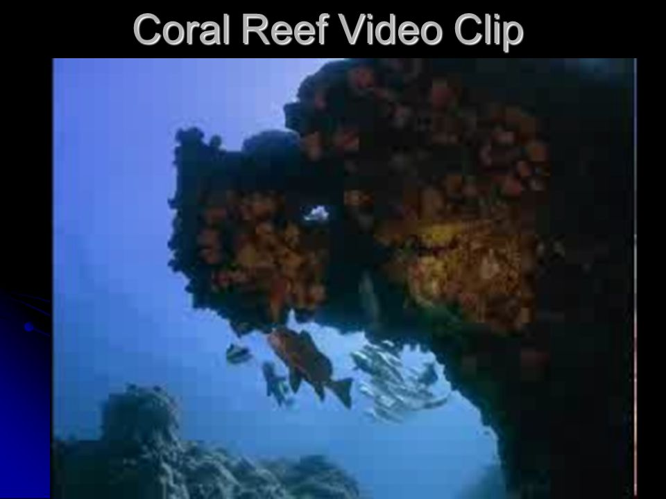 Coral Reef Video Clip