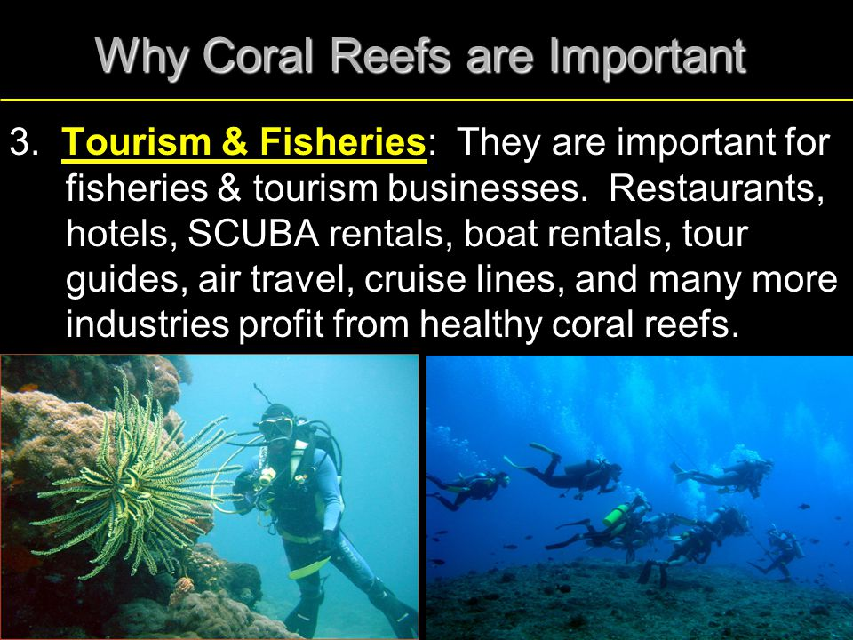 Why Coral Reefs are Important 3. Tourism & Fisheries: They are important for fisheries & tourism businesses. Restaurants, hotels, SCUBA rentals, boat