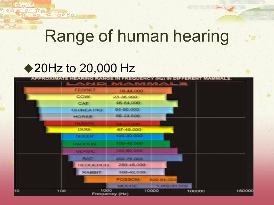 Range of human hearing  20Hz to 20,000 Hz