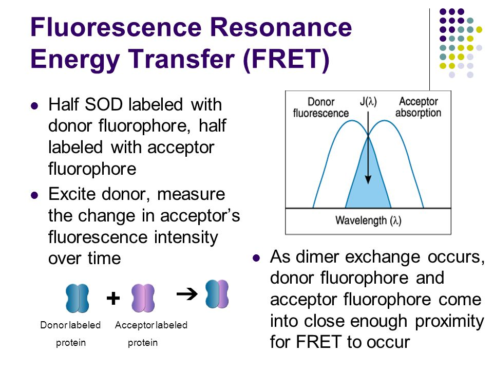 Fluorescence Resonance Energy Transfer (FRET) Half SOD labeled with donor fluorophore, half labeled with acceptor fluorophore Excite donor, measure th