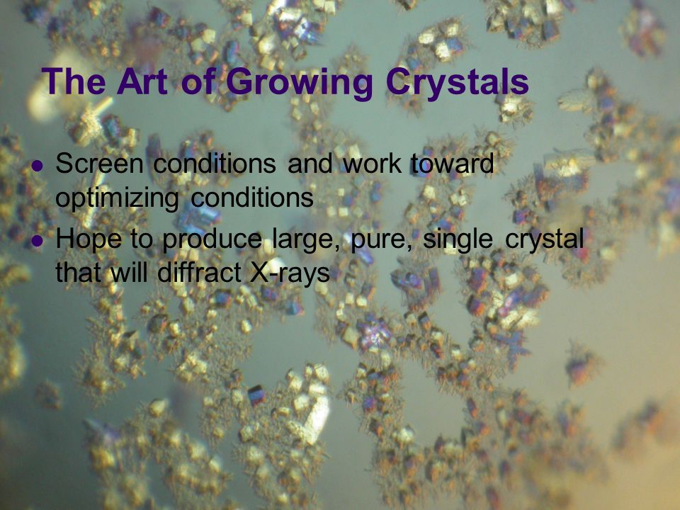 Screen conditions and work toward optimizing conditions Hope to produce large, pure, single crystal that will diffract X-rays The Art of Growing Cryst