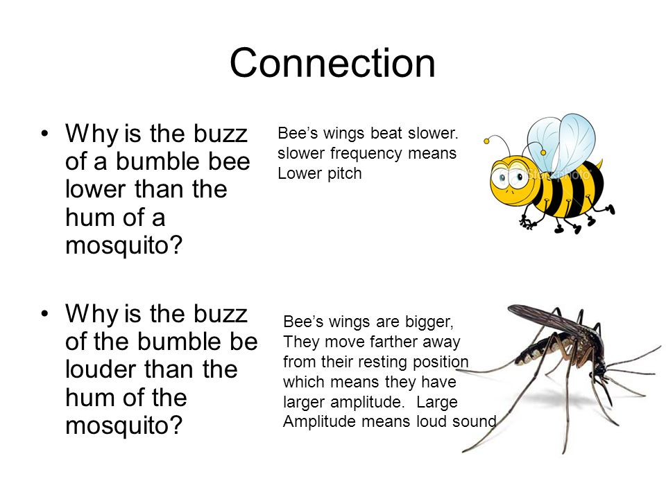 Connection Why is the buzz of a bumble bee lower than the hum of a mosquito.