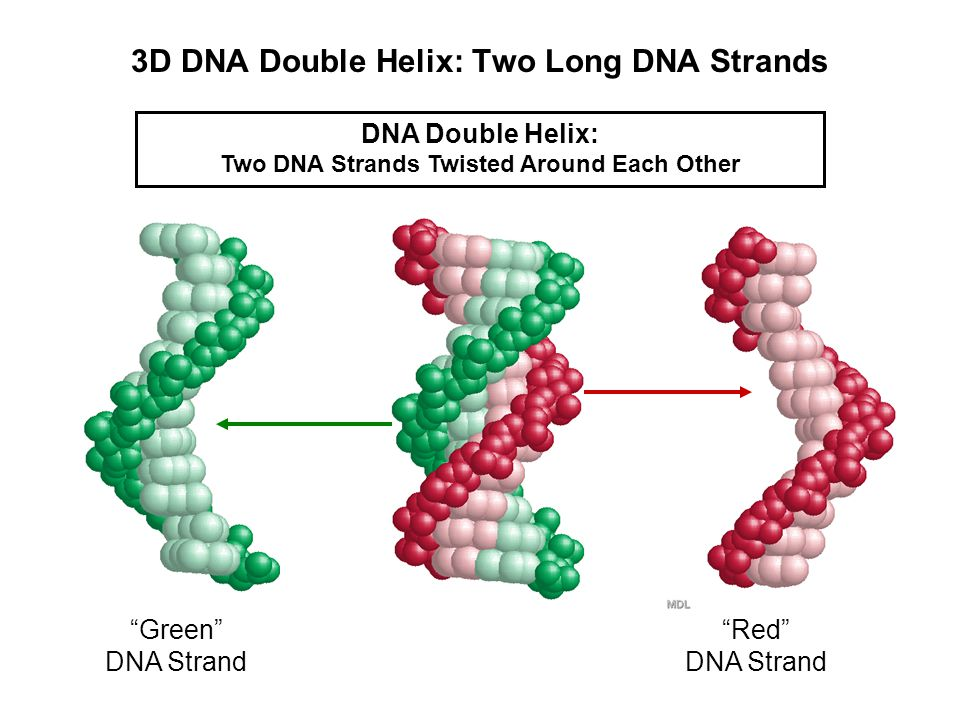 What Does DNA Look Like.