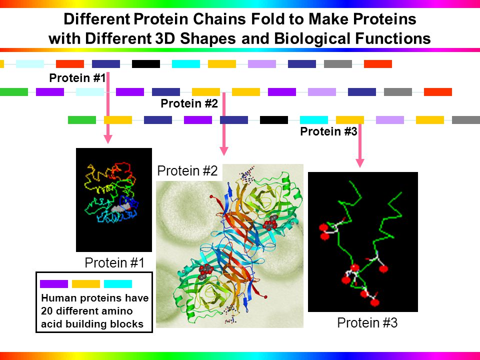 Proteins Fold into 3D Structures Likes Water Hates Water Legend Polar Pocket Proteins live in a watery environment (living organisms!).