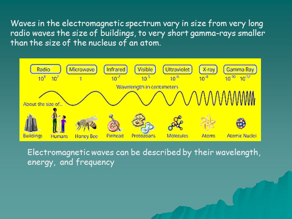 Waves in the electromagnetic spectrum vary in size from very long radio waves the size of buildings, to very short gamma-rays smaller than the size of