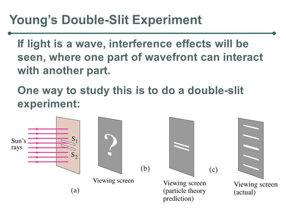 Young's Double-Slit Experiment If light is a wave, interference effects will be seen, where one part of wavefront can interact with another part. One